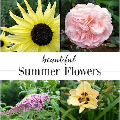Beautiful summer flowers