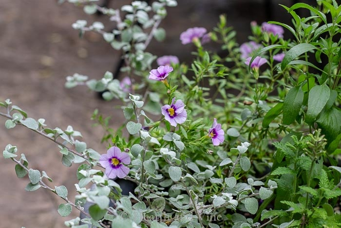Flowering pot