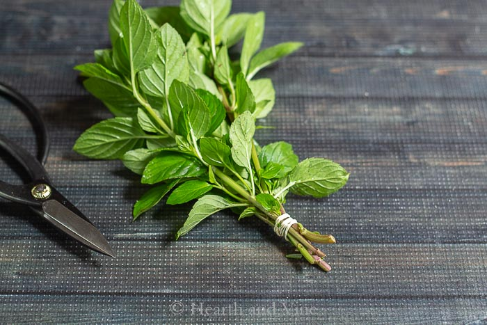 Mint sprigs for drying, bundled with a rubber band and scissors.