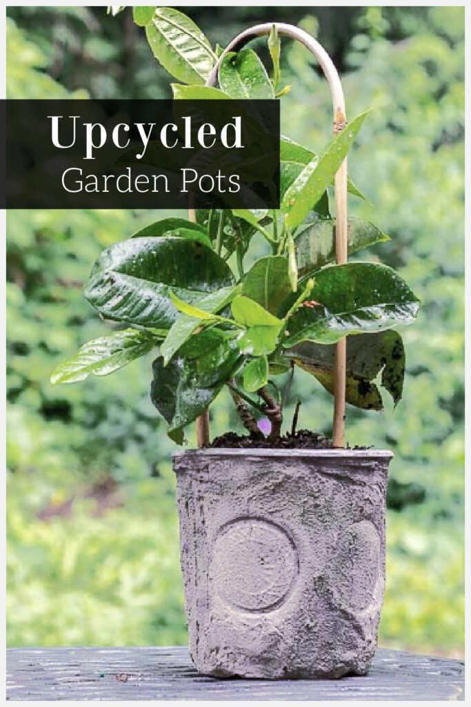 Mandevilla vine plant in an upcycled plastic pot with grout