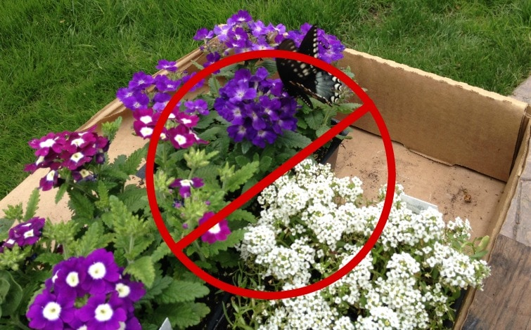 Box of flowering plants