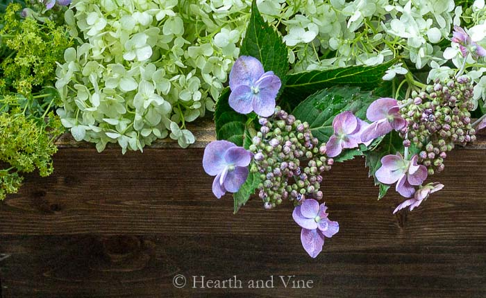 Lace hydrangea close up in wooden box centerpiece.