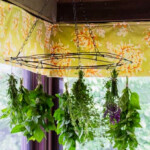 Fresh herbs hanging from a wire frame on the ceiling.