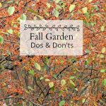 Fall Garden  – Top Dos and Don'ts To Wrap Up the Season