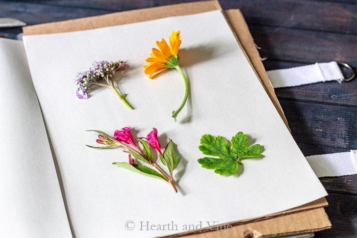 Fresh flowers in flower press book.