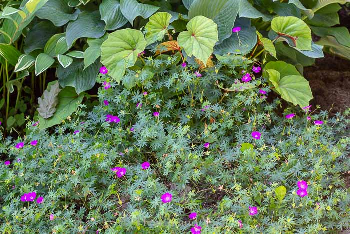 gardening mistakes - crowded flower bed