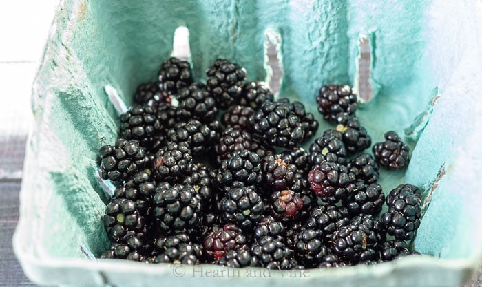 Ripe wild black raspberries