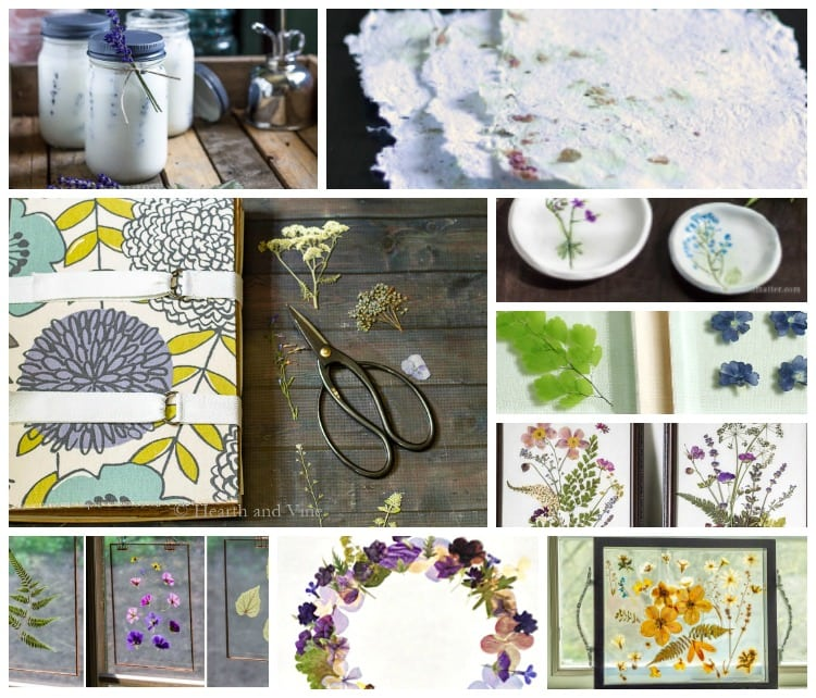 9 Pressed Flower Ideas You Can Easily Make From Your Garden