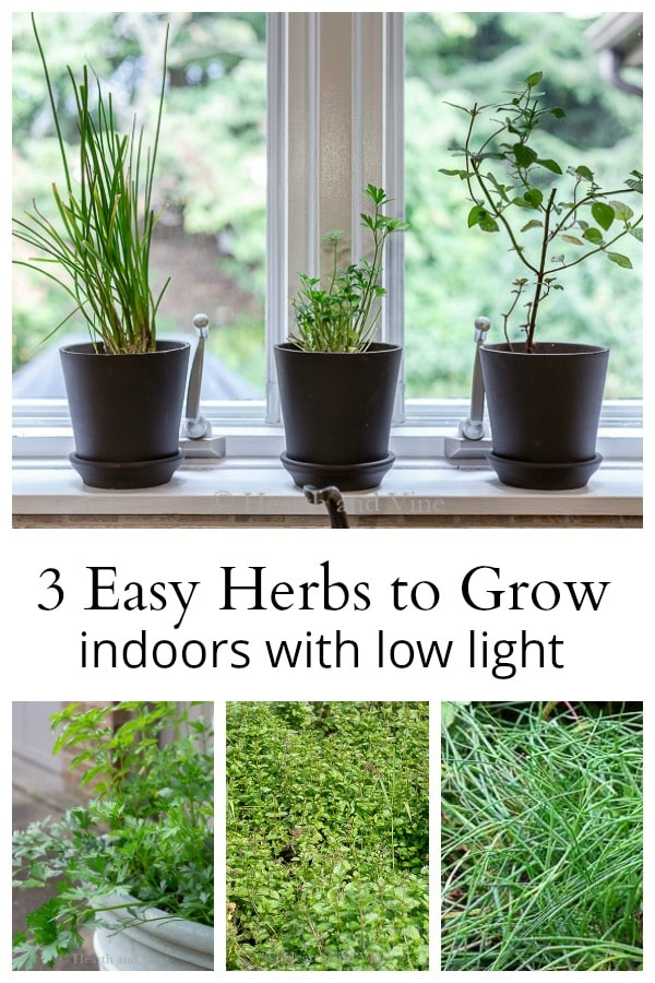 3 easy herbs to grow indoors