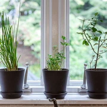 Easy herbs in pots on windowsill
