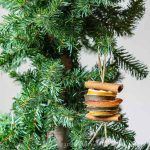 Dried fruit ornament on tree