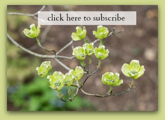 Subscribe button spring flowers