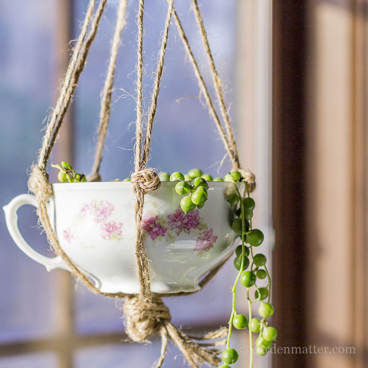 antique teacup planter
