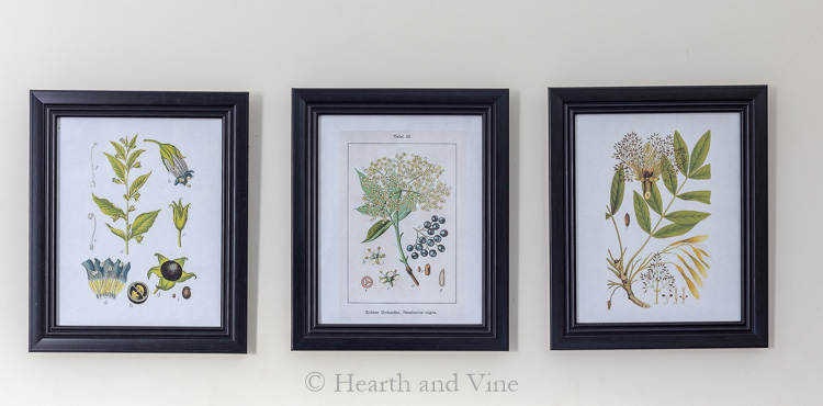3 botanical prints on wall