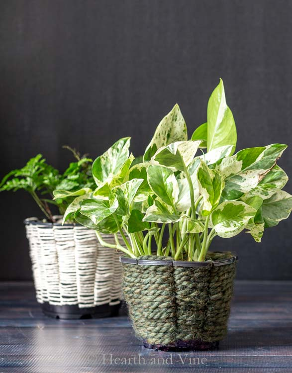 woven containers with pothos and ferns