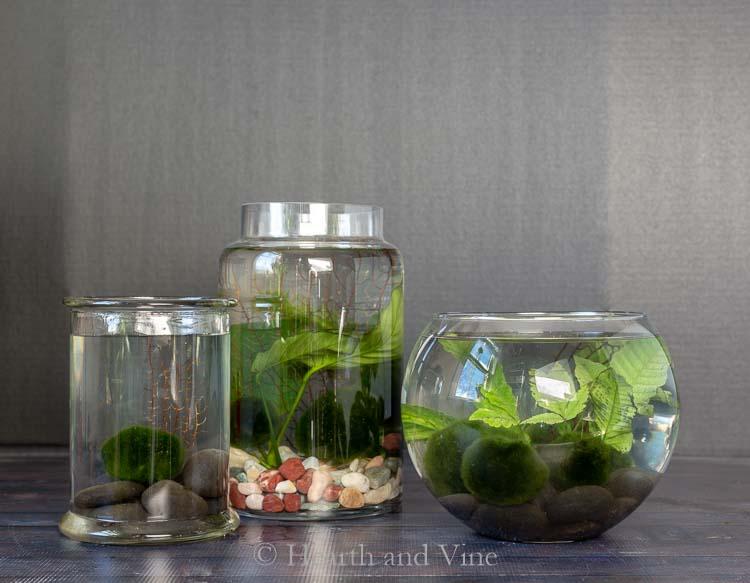 water terrarium trio