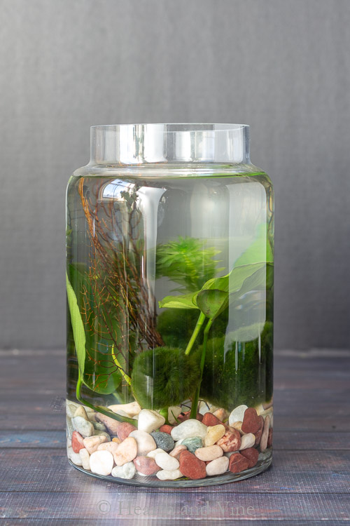 tall container water garden