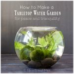 Fishbowl indoor water garden