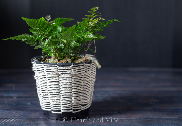 Fern in woven planter using cotton cording.