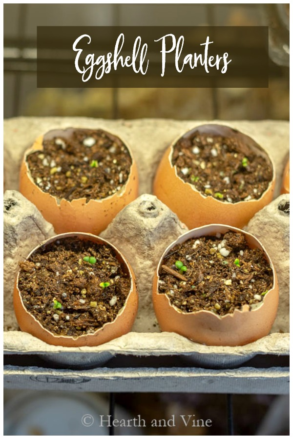 Brown eggshells to start seeds