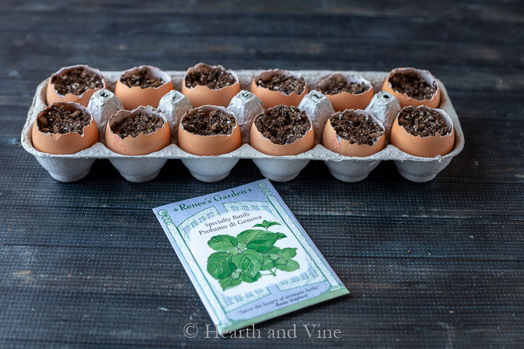 Eggshell planters with basil seed packet