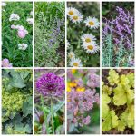 drought tolerant plants collage