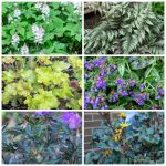 collage of shade loving perennial plants