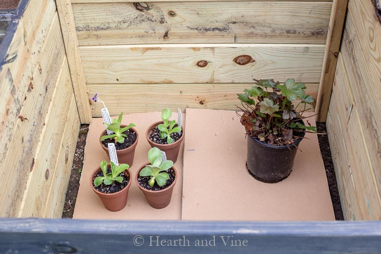 inside of cold frame with cardboard and plants