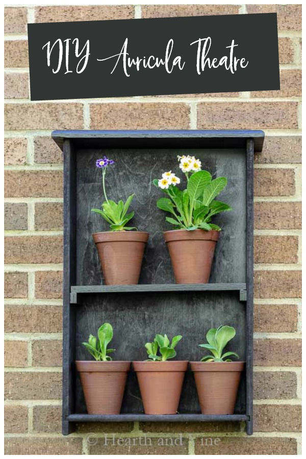 Diy Auricula Theatre From Old Drawer