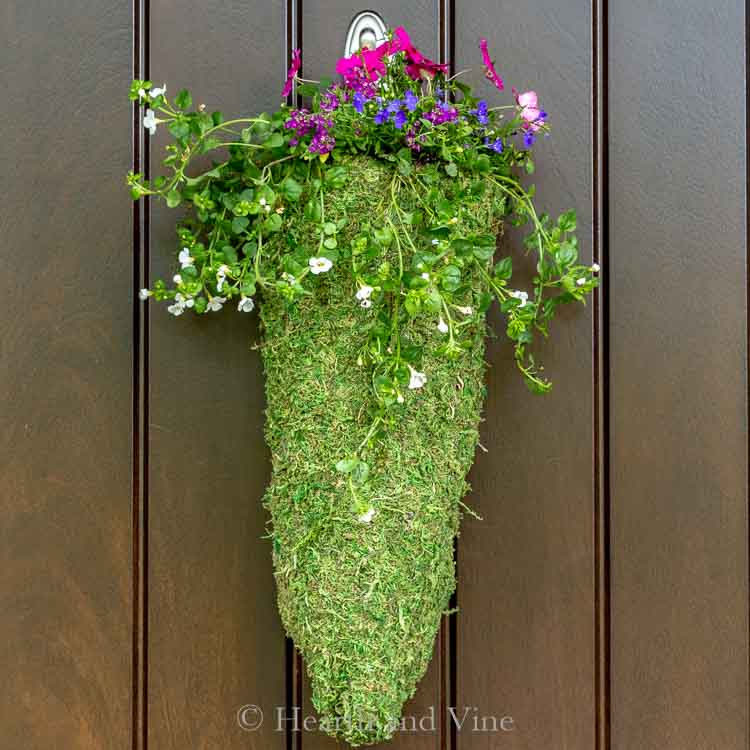 Cone shaped moss hanging planter
