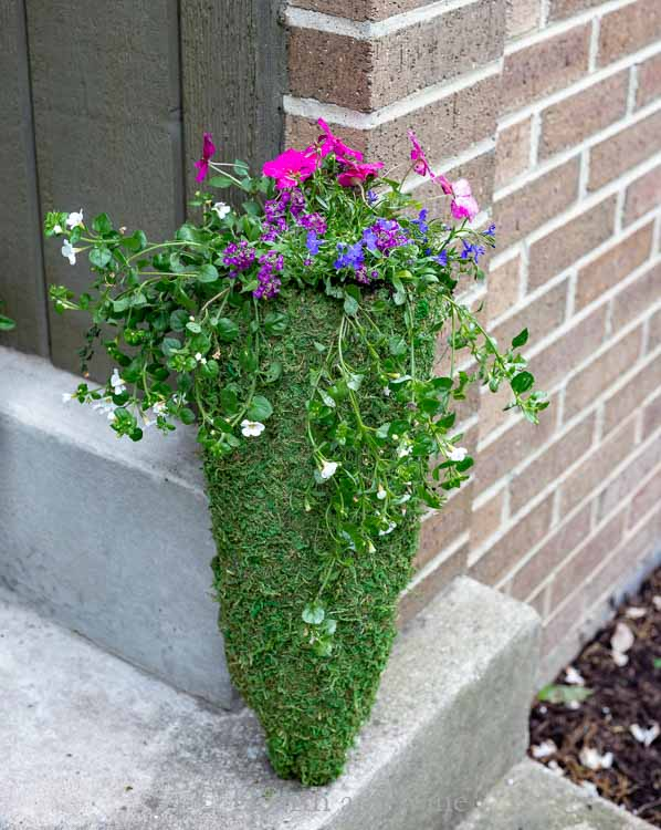 Moss planter with flowers on step