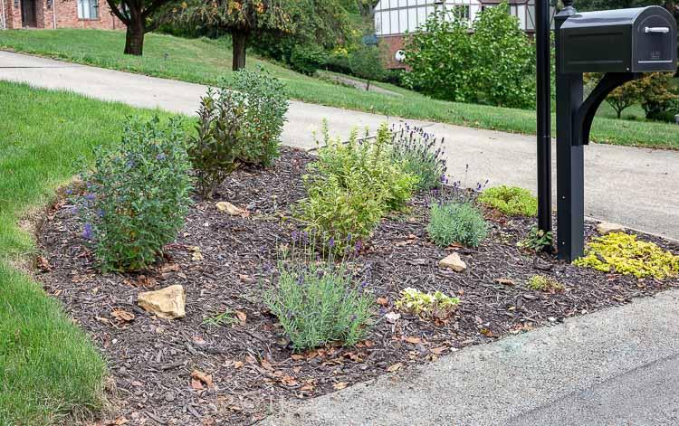 Mailbox garden 3 months after planting