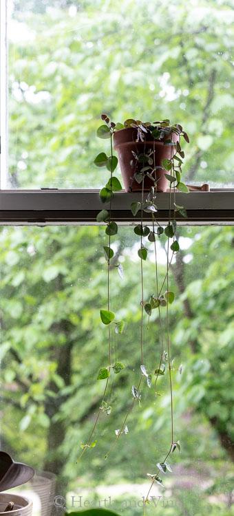 String of hearts in window