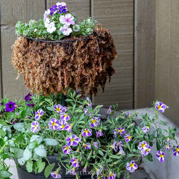 Flowers planted in DIY double pot planter