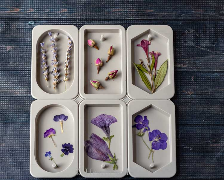 Pressed flowers in wax sachet molds