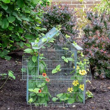 Birdcage used as a planter in the garden bed
