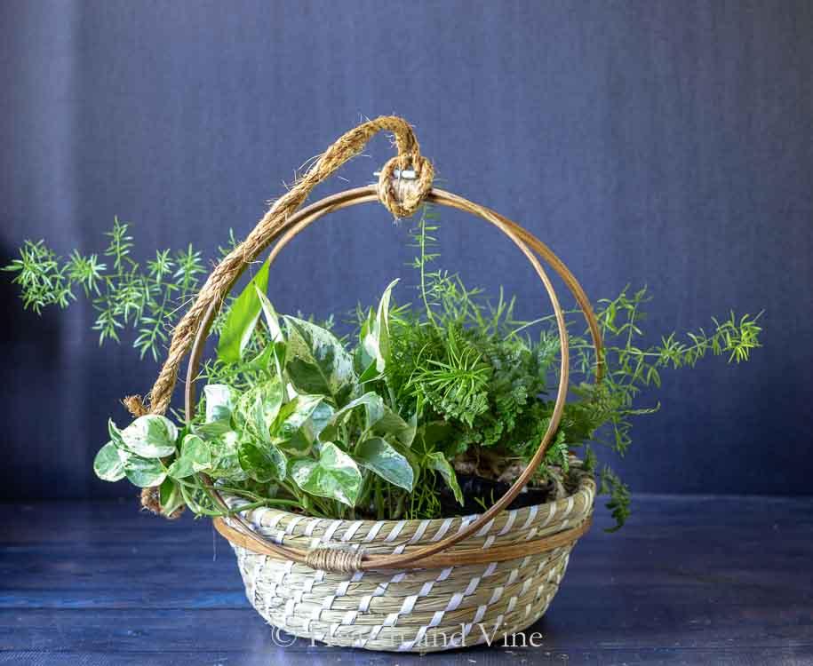 Embroidery hoop basket planter