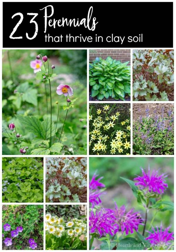 gallery of clay soil perennials