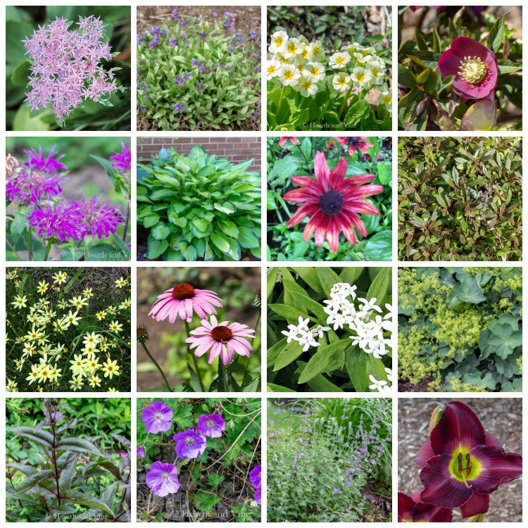 Gallery of perennial plants for clay soil