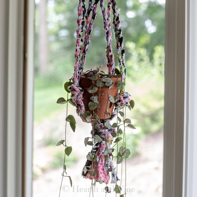 String of heart in hanging planter