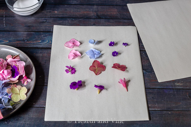 Fresh flowers on blotting paper