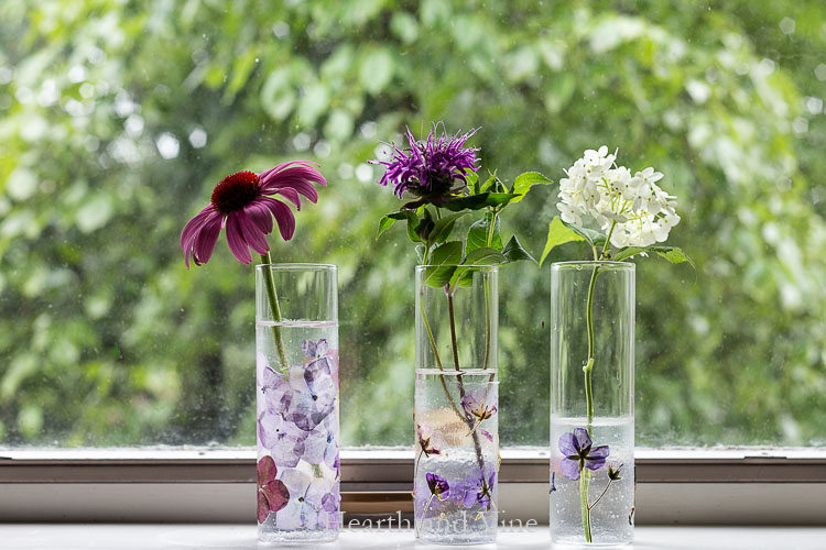 Pressed flower vases in window