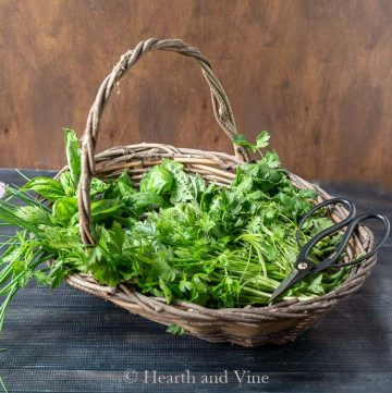 Basket of fresh herbs