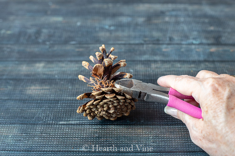 Pinecone cutting clippers