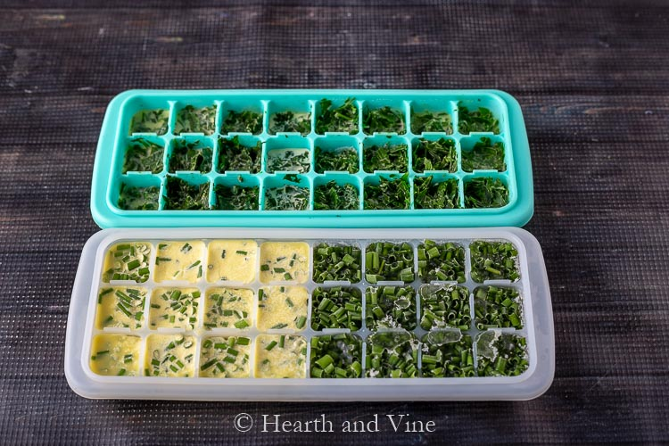 Ice cube trays with chives and cilantro