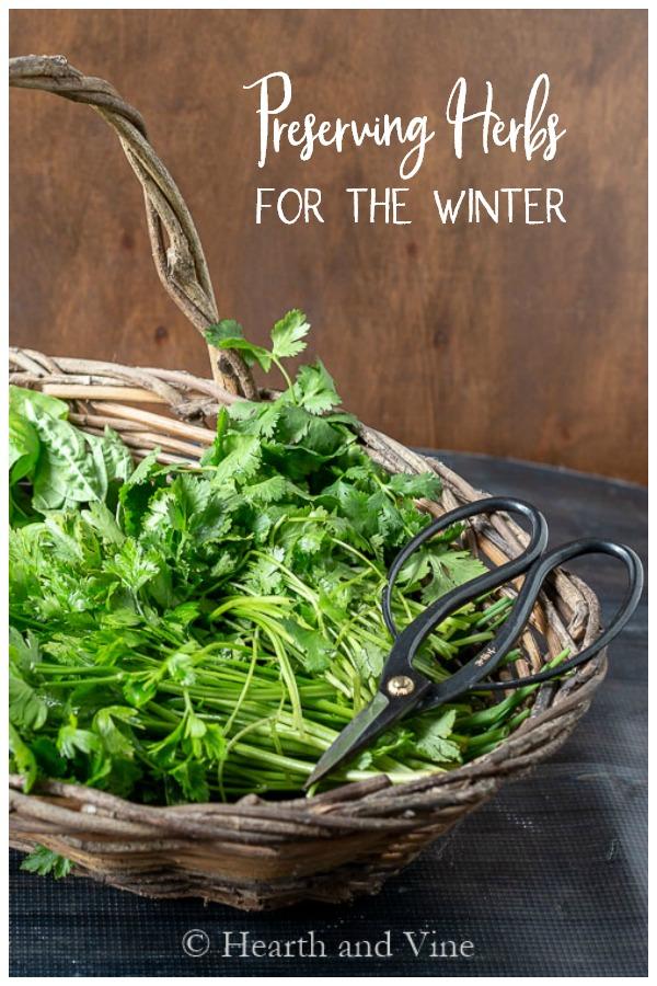 Basket of cut herbs
