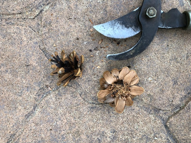 Two pieces of pinecone