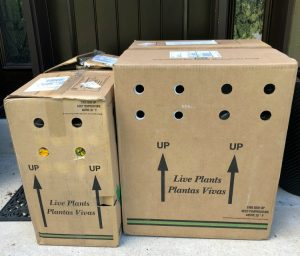 Proven Winners Direct boxes