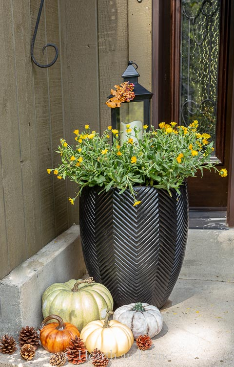 Fall planter with yellow calendula and lantern