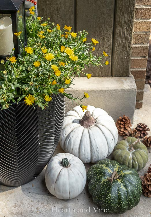 Yellow English marigolds and neutral pumpkins